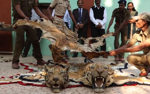 Mission anti-braconnage dans le parc national de Chitwan